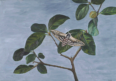 full view of oil painting - Privet Hawkmoth