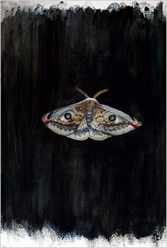 full view of watercolour - Eyed Hawkmoth